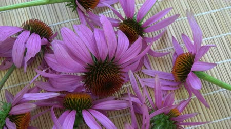 homeopathic : Rotating echinacea coneflower medical herb bunch on bamboo mat
