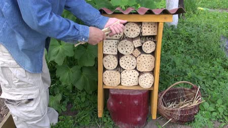 abrigo : Gardener farmer fixing reeds in new insect hotel for wild bees and other insects