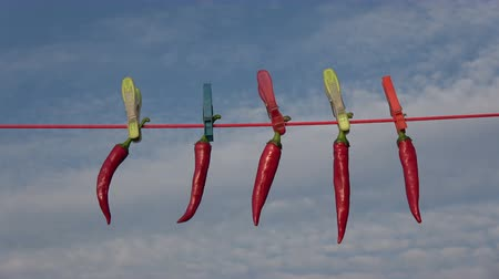 capsicum : Hang  fresh red hot chili peppers on string with clothespins on sky background