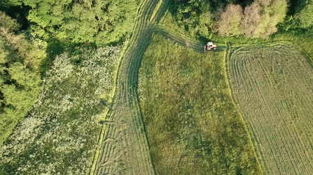 verim : Agriculture tractor cut harvesting summer hay on meadow, aerial view Stok Video