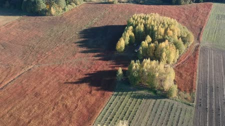 trigo sarraceno : Beautiful autumn ripe brown sunny buckwheat field and tree groves, aerial view