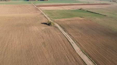 보았다고 : Plowed and sowed autumn farmland fields and empty bad gravel road, aerial view 무비클립