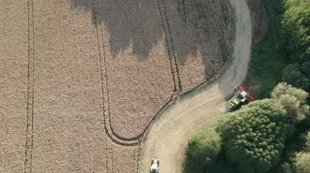 Combine harvester harvesting rapeseed, aerial view Stock mozgókép
