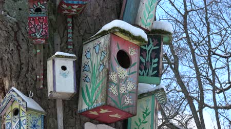 певчая птица : Old tree trunk with many colorful handmade bird nesting box in city park