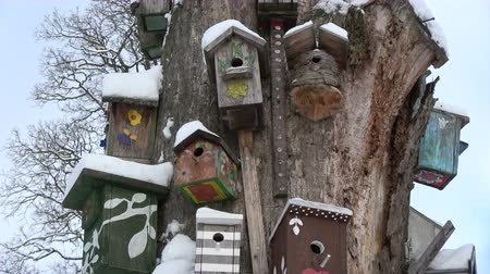 oco : Snowy birds nesting boxes collection on old tree in winter park