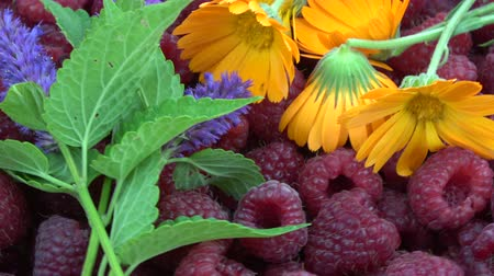 антиоксидант : Rotating fresh healthy berries and herbs background. Raspberries, anise hyssop and marigold