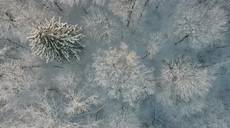 겨울의 : Beautiful  snowy winter  forest, aerial view