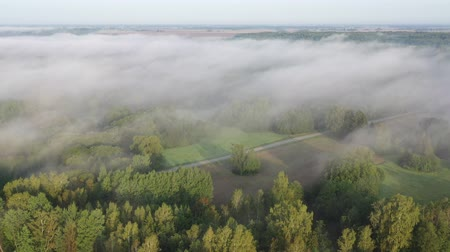 Литва : Flowing mist above early morning landscape with forest and road, aerial view Стоковые видеозаписи