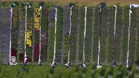 grande grupo de objetos : Various flowers and plants nursery flowerbeds and greenhouse in farm, aerial view Vídeos