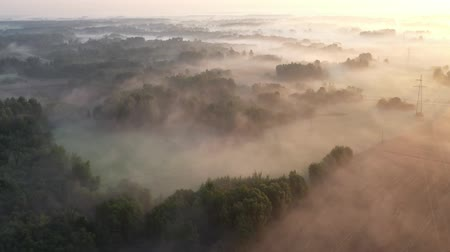 Литва : Magical misty morning landscape with groves, fields and electricity line after sunrise, aerial view