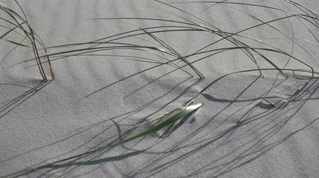 낟알 모양의 : sand and grass  motion in wind on sea beach 무비클립