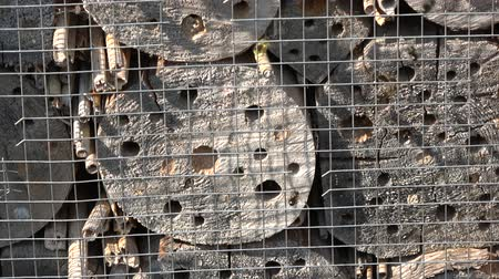 kamış : protected Insect hotel  and many flying wild bees in spring
