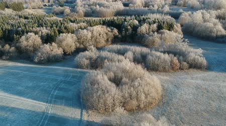 Beautiful autumn landscape with groves and agriculture fields, early hoarfrost, aerial view 動画素材