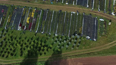 Big flowers and plants nursery flowerbeds and greenhouse, aerial view