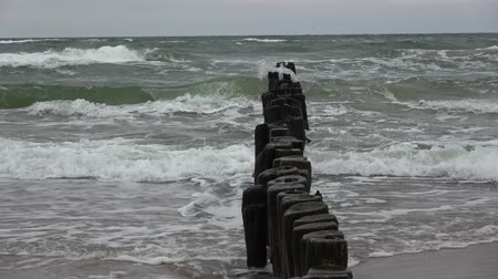 balti tenger : Old ruined jetty pier wooden posts jetty piles on baltic sea beach and waves Stock mozgókép