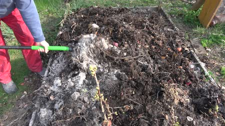 rothadás : Gardener to dig and insert wood ash in compost heap soil with fork tool