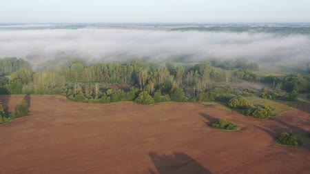 Литва : misty morning landscape with groves and fields  after sunrise, aerial view