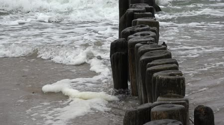 baltık denizi : Old ruined  wooden posts jetty piles  on  sea beach and waves, zoom out