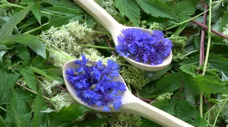 chabry : Rotating beautiful medical and tea herbs – cornflowers in wooden spoons on sweetmeadow fresh background Wideo