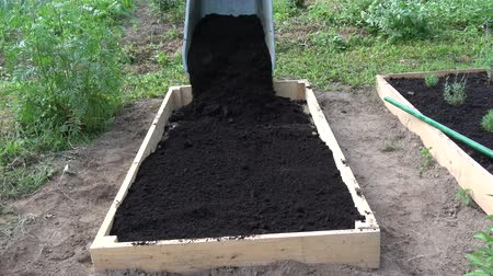 el arabası : farmer pouring black soil humus from wheelbarrow to new wooden raised  bed for medical herbs Stok Video