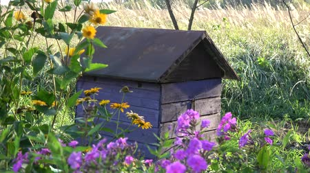 Old beehive in summer end garden and wind in flowers