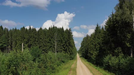 deforestation : Summer time gravel road in forest from drone Stock Footage