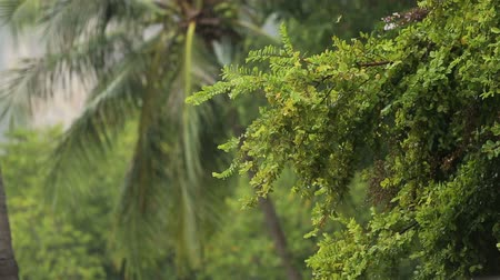 las tropikalny : strong tropical rain fall on coconut trees in green jungle Wideo
