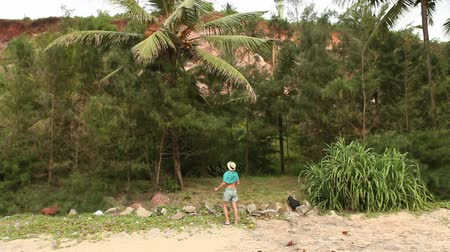 coconut palm tree : man tries to knock down a coconut from green tree in tropical forest