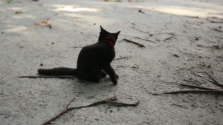 милый : black cat sits on sand beach licks itself and goes away
