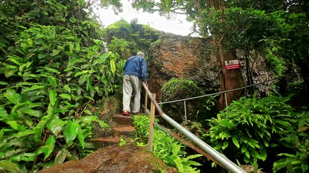 zadnice : backside view man climbs stone steps towards waterfall among green tropical plants in national park