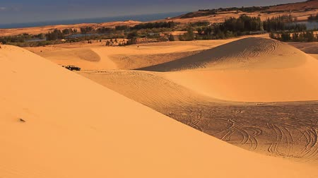 crest dune : panorama of white sand dune hills with tracks against distant plants