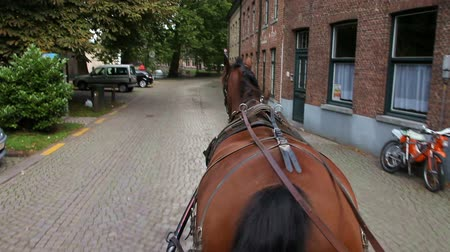 sáně : Carriage horse ride around the street