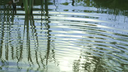 пруд : Water ripples in a pond