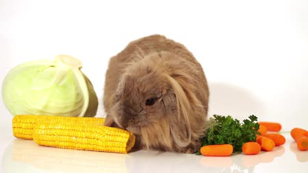 nyúl : fluffy rabbit with some vegetables on white Stock mozgókép