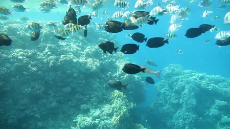 underwater video : Underwater footage in the Red Sea. Egypt
