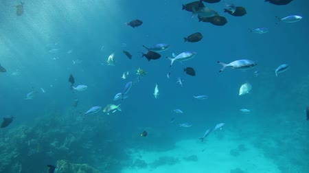 underwater scenes : Fish swimming through sun beams of the Red Sea Stock Footage