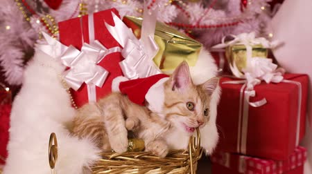 tlapky : Little red-haired kitten in Santa hat sitting in a sled under the Christmas tree with gifts