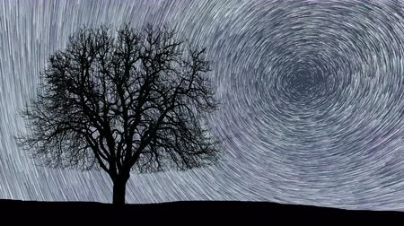 rotaları : Polaris North Star at center as earth rotates on axis. Beautiful Star Trails Time-lapse Stunning Cosmos. Beautiful night sky