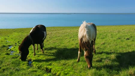égua : Wild horses eating green grass by the blue ocean Vídeos