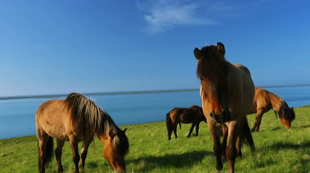 égua : Wild horses on rural pasture land by the blue sea