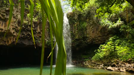 kapradina : View Through Palm Trees to Tropical Waterfall and Swimming Hole in Hawaii