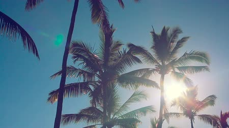 coconut palm tree : Sunrise Lens Flare Through Palm Trees on a Beautiful Blue Sky Background Stock Footage