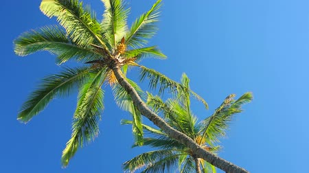zmiany : Palm Trees on a Beautiful Blue Sky Sunny Background. Smooth Pan Up to Down Motion. Wideo