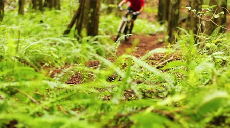 kockázatos : An extreme mountain biker speeds down a bike trail in the forest during the day. Outdoor Sports Healthy Lifestyle. Slow Pan Shot with Steadicam. Summer Extreme Sports.