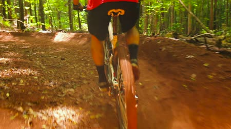 alpy : Mountain Biking Forest Trail Uphill Cross Training. Outdoor Sports Healthy Lifestyle. Young Fit Man in Red Shirt Rushes Down Mountain Bike Trail Through a Lush Forest. Slow Pan Shot with Steadicam. Summer Extreme Sports. Dostupné videozáznamy