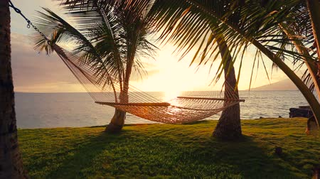 гамак : Hammock and Palm Trees at Sunset. Hammock Swinging on the Wind Between Two Palm Trees. Backyard Oceanfront Real Estate. Maui