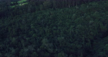 low lighting : Sunset Aerial View. Flight over green grassy hills and forest.