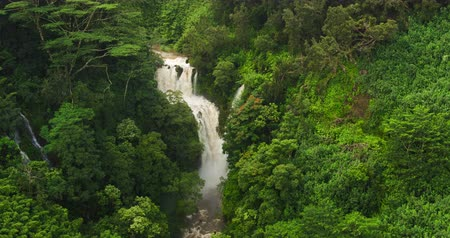 düşük : Amazing Powerful Waterfall in Tropical Jungle. Aerial View Flying Over Rushing Waterfall in Rain Forest. Stok Video
