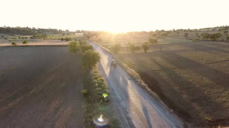 フォロー : Oregano fields and the tractor following.Some oregano and the other fields view to sunshine 動画素材