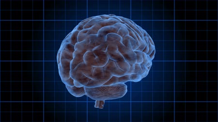 radiologia : Brain 1003: Stock footage of a human brain rotating on a blue grid (Loop). Vídeos